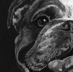 English Bulldog gift, English bulldog art, bulldog drawing,black and white giclee print, charcoal bulldog portrait,… #dogs #etsy #art