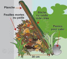 Planche contre un mur. Abri pour hérissons dans un endroit ombragé, à l'abri du vent et de la pluie.  Antilles limaces naturel. ..
