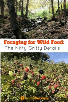 Foraging for Food – The Nitty-Gritty on Gathering. How to find edible plants in the wild in a survival situation. #foraging #wildfood #survival #edibleplants #primalsurvivor #wilderness