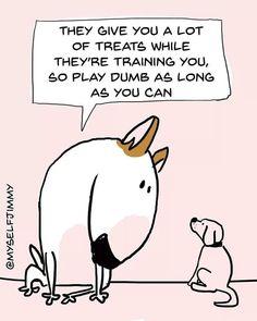 Uplifting So You Want A American Pit Bull Terrier Ideas. Fabulous So You Want A American Pit Bull Terrier Ideas. Mini Bull Terriers, English Bull Terriers, Staffordshire Bull Terrier, Perros Bull Terrier, Bull Terrier Funny, Pitbull Terrier, Deaf Dog, Dog Agility, Dog Art