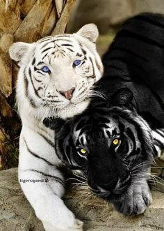 """People have such difficulty with the colors of our skin. The """"animal world"""" has virtually no prejudice toward the color of their fur. And we are the """"advanced"""" ones.  Steve"""
