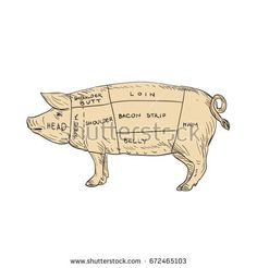 Illustration of a Vintage Pork Meat Cut Map done in hand sketch Drawing style.  #meatcutmap #sketch #illustration