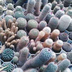 Рай перефекциониста и/или тамблер герл :D #vscocam #vscobelarus #belinsta #bestvscobelarus #belsquare #tropico #exotic #botany #cactus #awesome #perfectionist #greenhouse #exotic #aesthetic #followme
