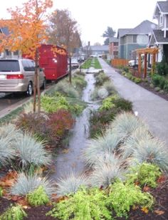 Low Impact Development Stormwater Management Solutions - Sidewalk Rain Gardens, reduce impact of stormwater, improve water quality, provide habitat and aesthetic for all creatures in the neighborhood