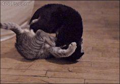 cat_fight.gif