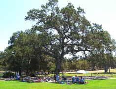 How many oak trees does Thousand Oaks really have? No one really knows. But if you commit a major crime, say murder, you'll be on the front page of the paper for a week. Kill an oak tree and you'll be front-page news for months!