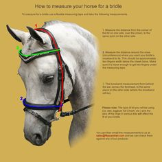 Measure your horse for a bridle