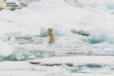 Arctic Hi five - Colin Mackenzie, National Geographic 2014 Photo Contest