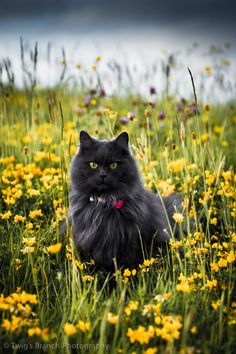 Cat Art... =^. ^=... ❤... In the Meadow... By Artist Twig's Branch Photography...