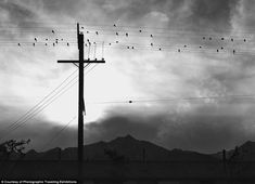 'Birds on Wire': One evening in 1943, Adams captured a stunning photograph of bird resting on wires in the camp in a style more reminiscent of the landscape photographs he is most famous for