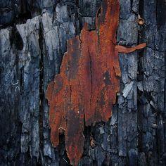 Bark on bark after a backburn  #naturephotography #naturegram #backburn #forestfire #bushfire #fire #nature #bush #bushwalk #wild #wilderness #australia #straya #bne #brisbane #queensland #qld #natureart #art #macro by a_gram_of_groges