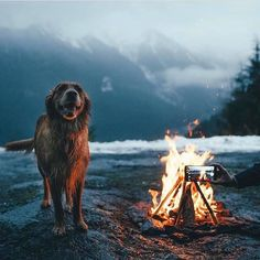 RV And Camping. Ideas To Help You Plan A Camping Adventure To Remember. Camping can be amazing. You can learn a lot about yourself when you camp, and it allows you to appreciate nature more. There are cheerful camp fires and hi Animals And Pets, Cute Animals, Funny Animals, Baby Animals, Camping Sauvage, Into The Wild, Tier Fotos, Go Camping, Luxury Camping