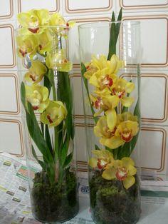 1- Orquideas Phalenopsis