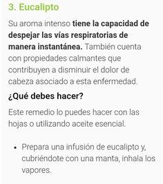 Sinusitis Infusión de EUCALIPTO Paranasal Sinuses, Health