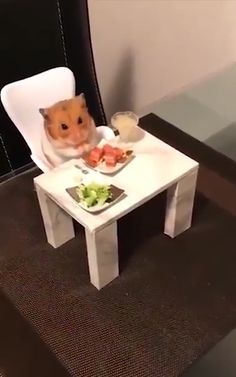 Only the best for this hamster Baby Animals Pictures, Cute Animal Photos, Cute Animal Videos, Funny Animal Pictures, Hamster Habitat, Hamster Cages, Hamster Diys, Baby Animals Super Cute, Cute Little Animals
