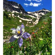 Wildflowers in Telluride's backcountry