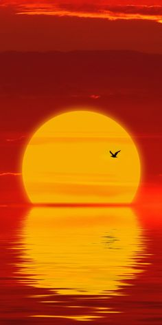 Sun, sunset, minimal, silhouette Wallpaper