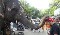 India: Elephant Blessing