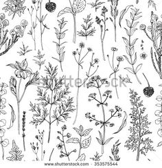 Pattern herbs and flowers painted black line. Space for text. Vector drawing.