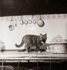 Minette Child.....Julia Childs cat