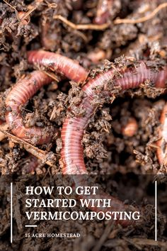 Vermicomposting is the greatest skill to learn on your homestead if you want a productive, thriving garden.