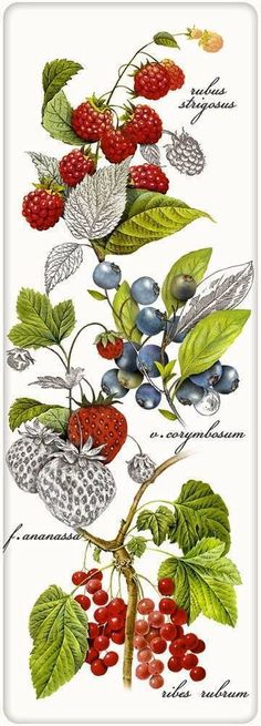 Botanical Berries 100% Cotton Flour Sack Dish Towel Tea Towel