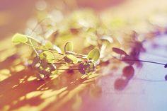 """spring shine"""