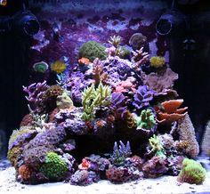 PodRod - 2009 Featured Nano Reefs - Featured Aquariums - Monthly Featured Nano Reef Aquarium Profiles - Nano-Reef.com Forums