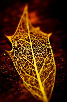 leaf skeletons are the most interesting things.