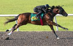 Pioneer of the Nile.  Look at that stride!  The sire of the living legend himself, American Pharoah.