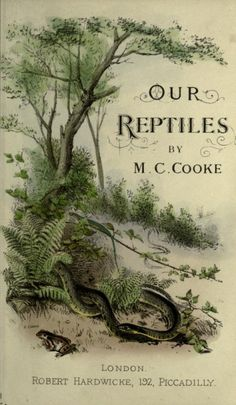 M.C. Cooke. Our Reptiles: A plain and easy account of the lizards, snakes, newts, toads, frogs, and tortoises indigenous to Great Britain. London, 1865.