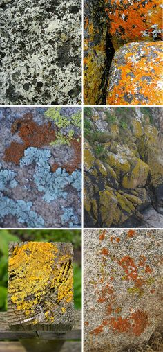 """*images via: """"Lichens on granite4"""" by Doug Beckers, """"Bay_of_Fires-Rocks"""" by Tracey Croke, Chelsea Densmore, Chelsea Densmore, """"Lichen"""" by Domini"""