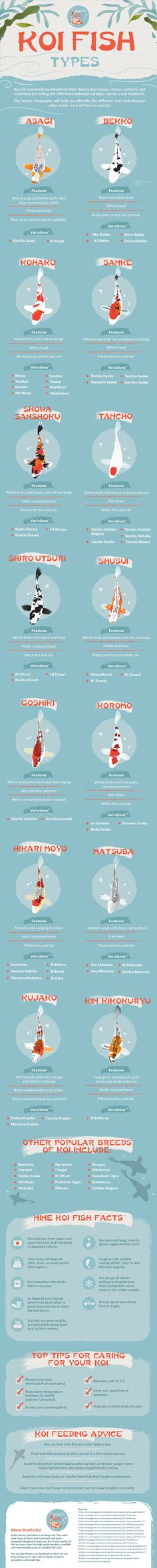 Koi Fish types and varieties
