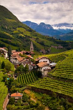 ღღ Aww... Many childhood memories of this beautiful Region! ~~~ Renon Vineyards (Bolzano), Trentino-Alto Adige, Italy