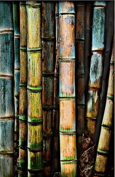 Leave a priceless patina (Image: Bamboo Forest Patterns In Nature, Textures Patterns, Photography Courses, Nature Photography, Bamboo Art, Bamboo Image, Giant Bamboo, Bonsai, Tree Bark