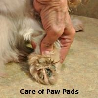 These pads need a little work.  http://miracleshihtzu.com/grooming-the-shih-tzu.html