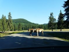 Horses, Mountains, Nature, Travel, Animals, Animais, Naturaleza, Animales, Animaux