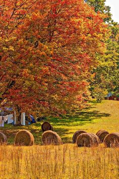 Autumn In West Virginia Photograph  - Autumn In West Virginia Fine Art Print