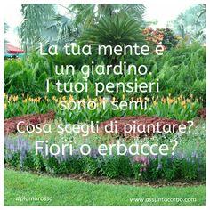 I semi che pianti nel tuo giardino  determinano la sua bellezza. Quando hai pensieri di gratitudine la tua mente diventa un rigoglioso giardino di fiori. Allenati alla gratitudine e ai pensieri più belli... ma non farlo solo per qualche minuto al giorno. Fa che diventi il tuo atteggiamento, il tuo modo di vivere e di leggere la realtà.  Sposta l'attenzione dalle erbacce ai fiori. Semina altri fiori, di nuovi e splendenti colori.   #piumarossa#citazioni   www.assuntacorbo.com