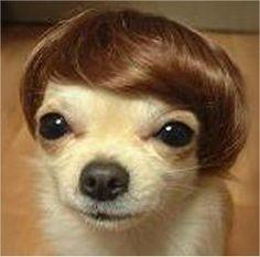 Perruque vintage style Beatles pour chien et chat  http://www.lolpetshop.com/deguisements-chiens-et-chats/53-perruque-style-beatles-.html