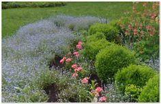 evergreens mixed with the perennial flower bed