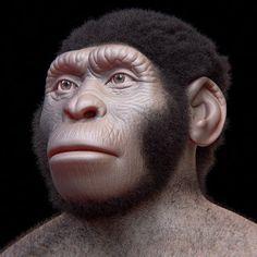 ATOR: Homo naledi