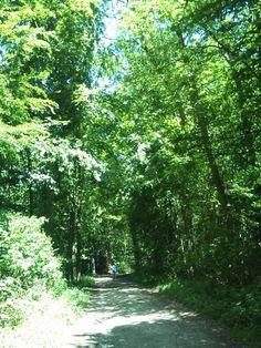 夏の林 / green forest **from Basel, Swiss**