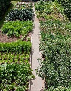 Small Vegetables Garden for Beginners_46