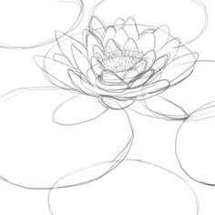 How to draw a lily pad - Drawing Factory