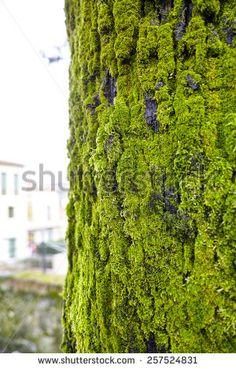 moss on tree in a meadow in la spezia - stock photo