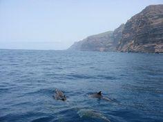 Delfines en Los Gigantes // Dolphins in Los Gigantes