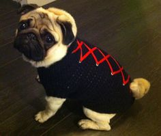 "Seriously cute - Dog ""Corset"" Sweater"