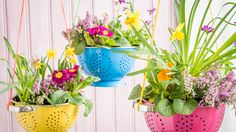 Kitchen colanders with flowers inside | Clever recycling hacks for a garden makeover | Tesco Living