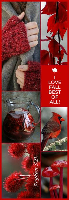 '' I Love Fall '' by Reyhan S.D. Collage Mood Board Photos